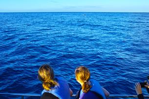 ハワイ オアフ島西海岸のイルカツアーの写真素材 [FYI00886307]