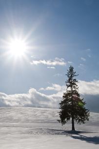冬の太陽と雪原の松の木の写真素材 [FYI00886310]