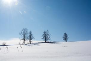 冬の青空と雪原の写真素材 [FYI00886315]