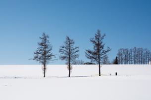 冬の青空と雪の丘の写真素材 [FYI00886319]