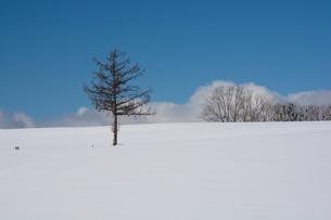 冬の青空と雪の丘の写真素材 [FYI00886320]