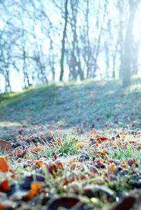 霜の降りた雑木林の写真素材 [FYI00886357]