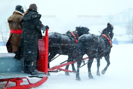 黒い馬が引く赤いソリの写真素材 [FYI00886360]