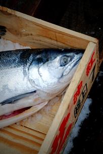 アラマキ鮭イメージの写真素材 [FYI00886378]