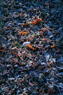 霜の降りた林の写真素材 [FYI00886384]