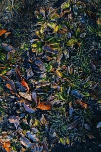 霜の降りた林の写真素材 [FYI00886386]