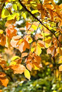 秋の色の写真素材 [FYI00886396]