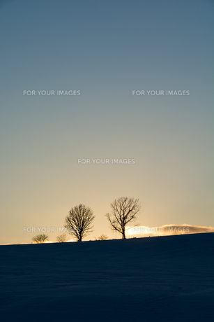 夕暮れの丘に立つ冬木立の写真素材 [FYI00886424]