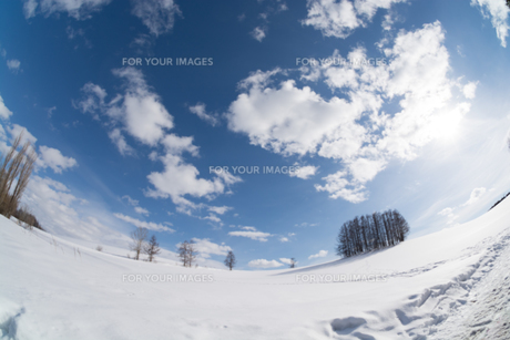 冬の青空とカラマツ林の写真素材 [FYI00886425]