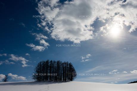 冬の青空とカラマツ林の写真素材 [FYI00886426]