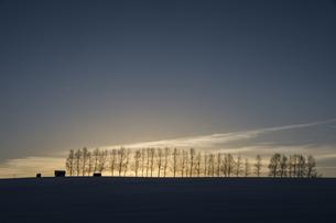 夕暮れの空と冬の並木の写真素材 [FYI00886427]