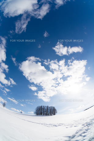 冬の青空とカラマツ林の写真素材 [FYI00886429]