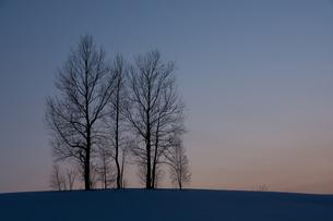 冬の夕暮れの丘と木立の写真素材 [FYI00886430]