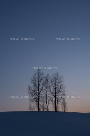 冬の夕暮れの丘と木立の写真素材 [FYI00886432]