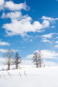 冬の青空と冬木立の写真素材 [FYI00886438]
