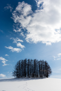 冬の青空と唐松林の写真素材 [FYI00886440]
