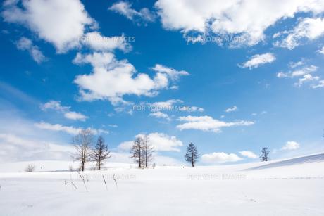 冬の青空と冬木立の写真素材 [FYI00886441]