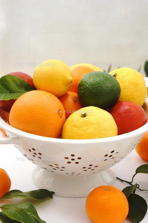 柑橘類の盛り合わせの写真素材 [FYI00886473]
