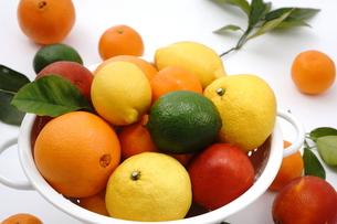 柑橘類の盛り合わせの写真素材 [FYI00886474]