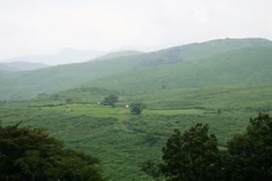 秋吉台国定公園の風景の写真素材 [FYI00886790]