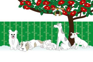 犬と猫と椿の花のポップなグリーティングカードのイラスト素材 [FYI00886921]
