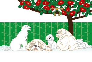 犬たちと椿の花のイラストのメッセージカードのイラスト素材 [FYI00886923]