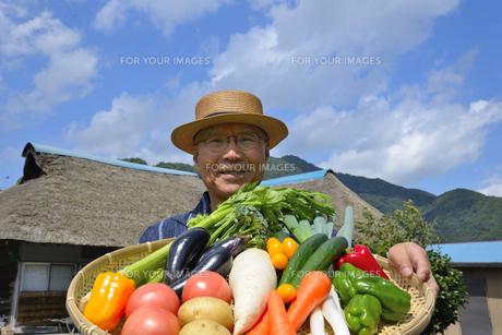 田舎暮らしで野菜を収穫しいてる笑顔のシニアの写真素材 [FYI00887060]