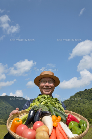田舎暮らしで野菜を収穫しいてる笑顔のシニアの写真素材 [FYI00887073]