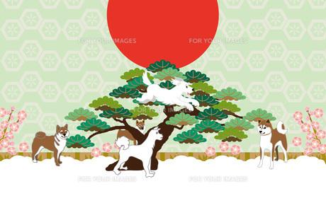 柴犬と松の木と日の出と梅の花のイラストのメッセージカードのイラスト素材 [FYI00887075]