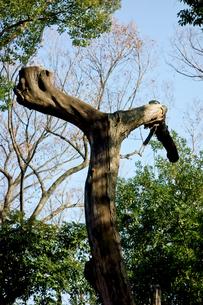 ユニークな樹木の写真素材 [FYI00887125]