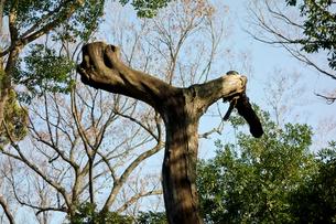 ユニークな樹木の写真素材 [FYI00887128]