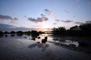 台風後の淀川の夕日の写真素材 [FYI00887228]