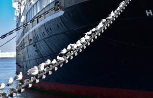 大型船を係留している船の鎖に休んでいる海鳥の写真素材 [FYI00887647]