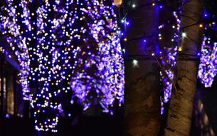 公園の樹木と青色のLEDの灯りの写真素材 [FYI00887656]