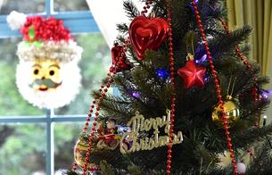 部屋の窓とクリスマスツリーの飾り付けの光景の写真素材 [FYI00887774]