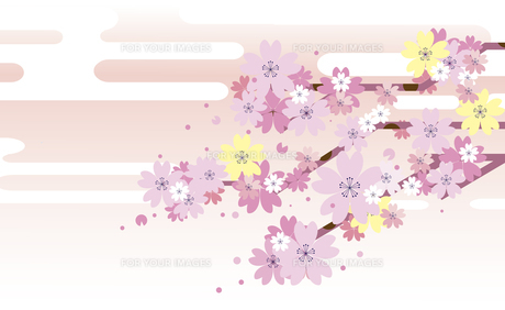 新春の桜の背景のイラスト素材 [FYI00887856]