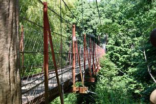 吊橋の写真素材 [FYI00887988]