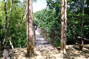 吊橋の写真素材 [FYI00887989]