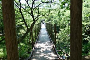 吊橋の写真素材 [FYI00887992]