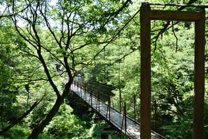 吊橋の写真素材 [FYI00887993]