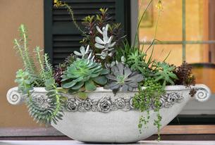 窓際に飾られた観葉植物の写真素材 [FYI00888287]