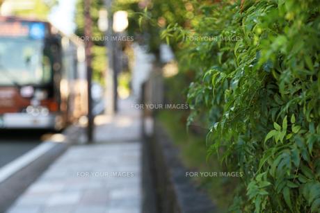 バス停横の歩道の緑の写真素材 [FYI00888308]