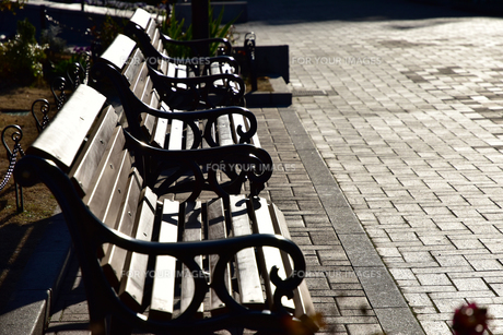 夕陽に照らされた公園のベンチの写真素材 [FYI00888326]