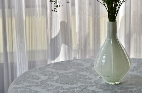 カーテン越しに射す太陽光で明るい白い室内の花瓶の写真素材 [FYI00888503]