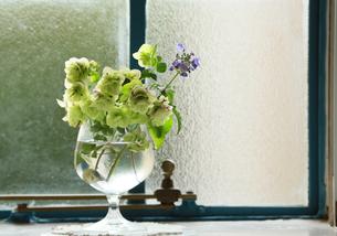 窓辺のワイングラスに飾られた花の写真素材 [FYI00888516]
