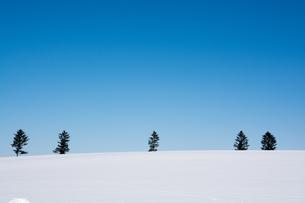 真っ青な青空と真っ白な雪原の写真素材 [FYI00888606]