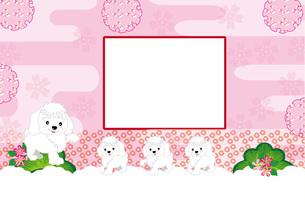 犬の家族のイラスト写真フレームのピンクの葉書テンプレートの写真素材 [FYI00888612]