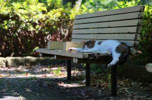 公園のベンチで居眠りする猫の写真素材 [FYI00888723]