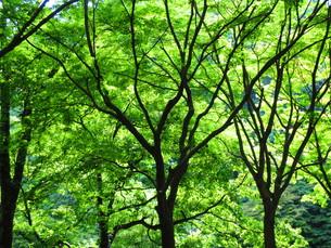 秩父の森の写真素材 [FYI00889073]