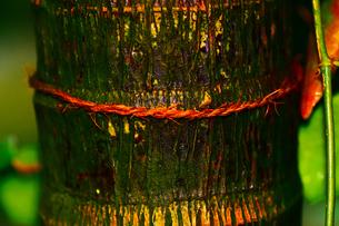 マクロで木の幹の写真素材 [FYI00889131]